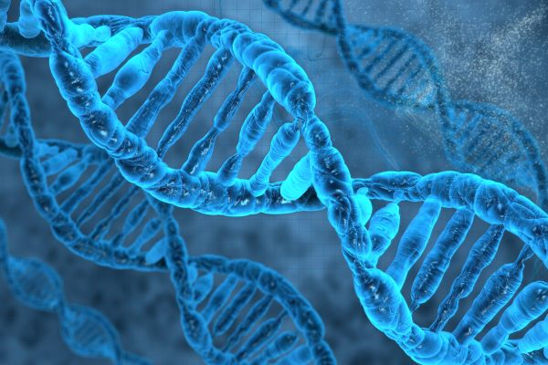 Human Gene Patent Validity Tested in Australian Court
