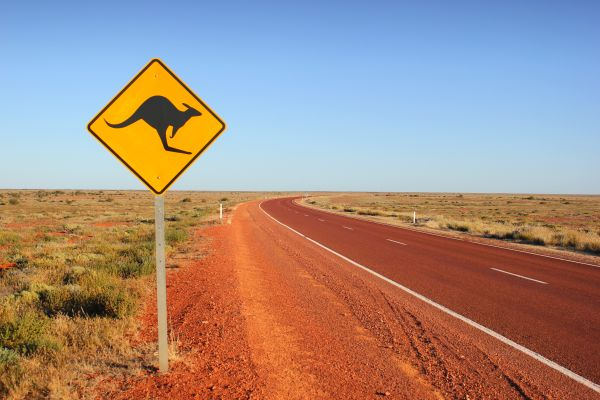 Kangaroo and warning sign